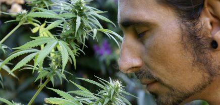 """Medizinisches Marihuana: Cannabis-Startup """"Hanfgarten"""" will 1 Million € crowdfunden"""
