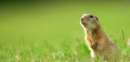 innovate4nature: WWF sucht Businessideen für die Artenvielfalt