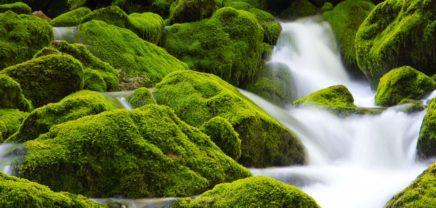 """""""Greenstart"""": Online-Voting für grüne Geschäftsidee des Jahres gestartet"""