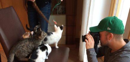 Lonely Cat Kombucha: Unpasteurisiert und beschnurrt