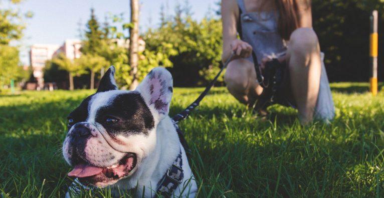 """Chatbot Steckbrief: """"Wachhund""""-Bot warnt Hundebesitzer vor Giftködern"""
