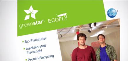 Greenstart Team EcoFly – das nachhaltige Fischfutter
