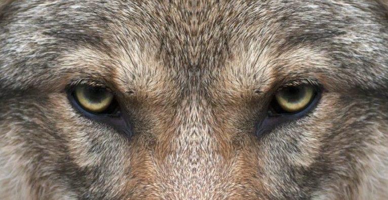 c42 watchdog