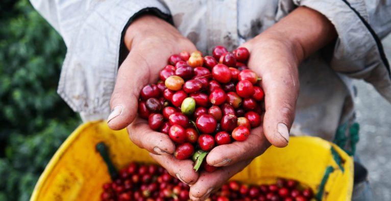 Kaffe-Startups aus Österreich
