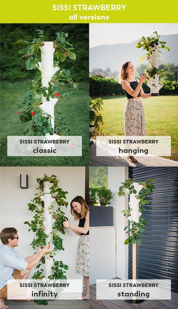(c) Gusta Garden: Erdbeerbaum Variationen