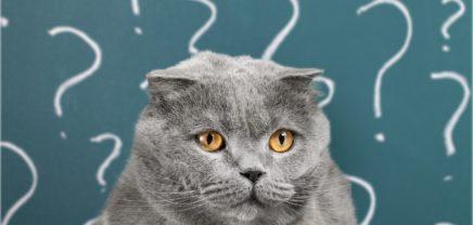 Die Gier nach News und Cat Content: Schattenseiten der Digitalisierung