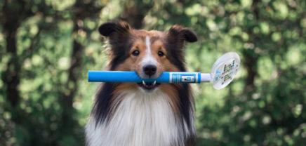 Wiener Startup PEZZ rettet Hundeleben mit einem smarten Urintest