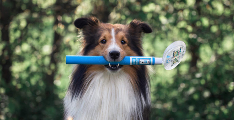 Urintest für Hunde von PEZZ