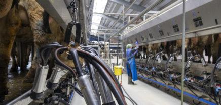 smaXtec: 3 Mio. Euro Kapitalspritze für Grazer Rinder-HealthTech-Startup