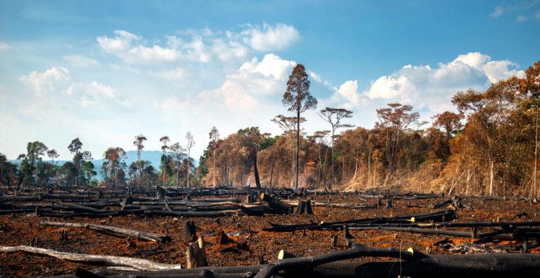 Biodiversitätskrise: Die Schwester der Klimakrise