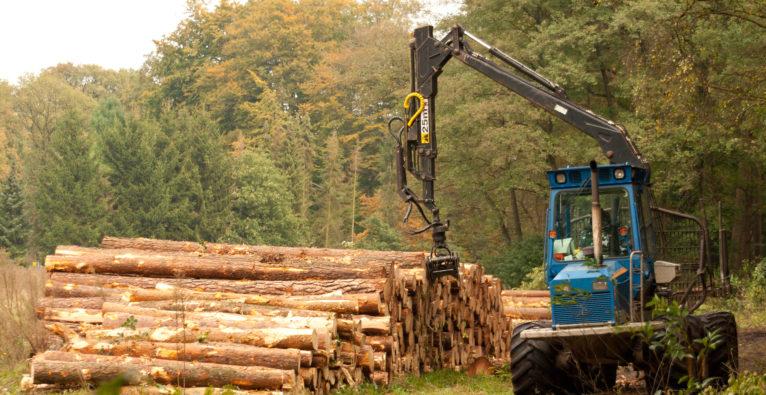 Tesla in Brandenburg: Für die Gigafactory in Grünheide wird ein Forstwald abgeholzt