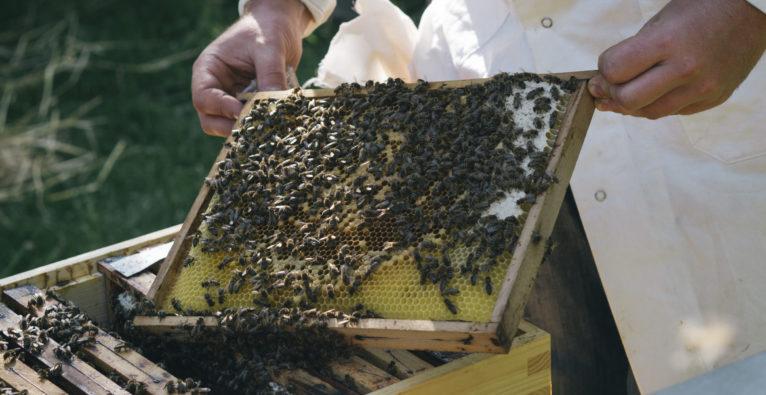 Hektar Nektar, Poreda, Martin Poreda, Bienen, Honig 2 Minuten 2 Millionen