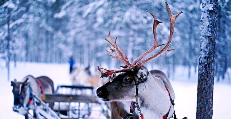 Renjer, Alex Kirchmair, Corona, Beef Jerky, Elk, Deer, Food, Nordic,