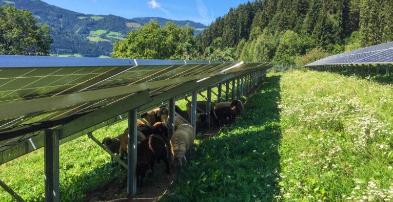 Meine Blumenwiese, eco-tec.at, Photovoltaik, 2 Minuten 2 Millionen