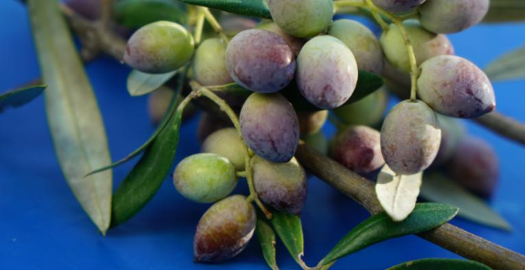 Aisthisi kombiniert NFTs mit Olivenöl.